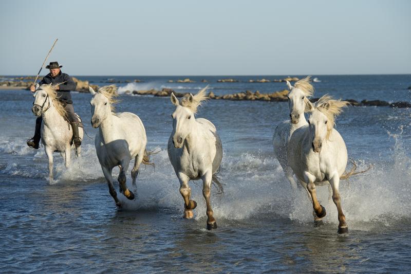 chevaux en bor de mer